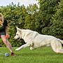 【Sunny Buy】◎現貨◎ 寵物純棉繩索玩具 大型犬 小型犬 可機洗 寵物訓練 牙齒強健