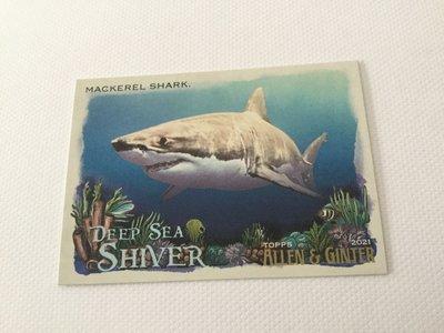 Mackerel Shark Allen & Ginter deep sea shiver DSS 11