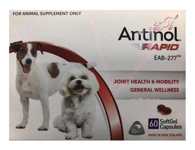 【HT】-免運-Antinol安適得酷版犬貓適用60顆/盒