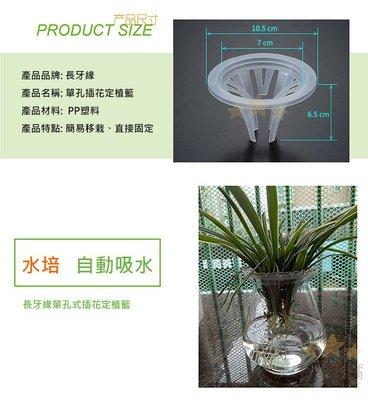 魚缸水植栽盆 三孔透明 單孔透明 植栽盆