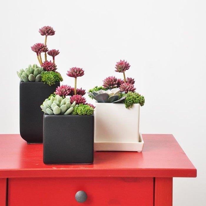 新品上市-仿真多肉盆栽陶瓷花盆裝飾品植物擺件art085-柳風向