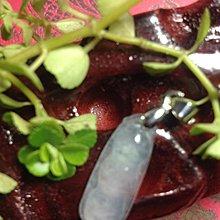 天然緬甸玻璃種A貨(超透玻璃種四季豆)附證書