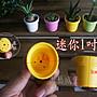 【園藝城堡】迷你1吋盆 1寸迷你盆 荷蘭盆 迷你花盆 多肉植物 仙人掌 小花盆 塑膠花盆