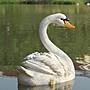 5Cgo【宅神】會員有優惠39117312219 樹脂婚慶園林景觀庭院仿真池塘花園鳥類浮水擺件仿真白天鵝庭院草坪大號
