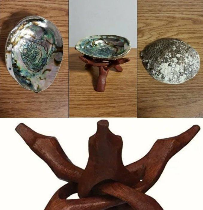 【三越Garden】美洲鮑魚海貝殼與印度紅鼎聖木