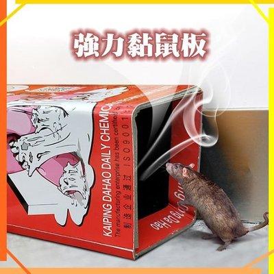 強力黏鼠板 達豪粘鼠板/強力膠捕鼠板/老鼠貼/捕鼠器/粘鼠貼/滅鼠/物理滅鼠/無毒/抓老鼠/殺蟲板01 現貨K18