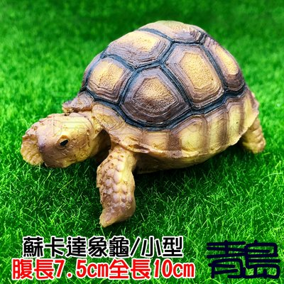 Y。。。青島水族。。。A3中國NOMO諾摩---仿真陸龜模型 3D擬真模型 烏龜/陸龜公仔==蘇卡達象龜/小型
