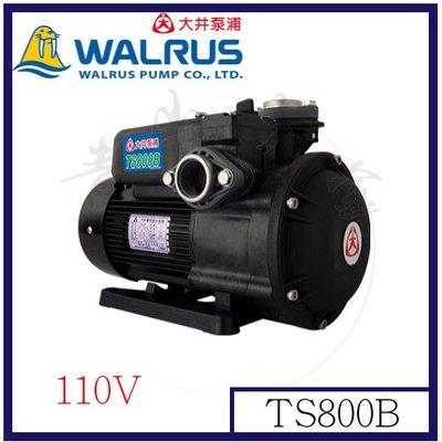 『青山六金』附發票 TS800B 大井 110V 泵浦 靜音不生銹1HP抽水馬達~抽水機~海水適用~ 噴霧機 高壓清洗機