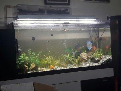 3尺,超白4尺魚缸  櫃