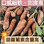 臺農66號紅心地瓜《小條》/無毒認證通過/豐富胡蘿蔔素