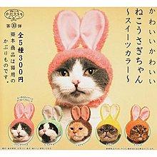 含稅 全套5款 貓咪頭巾 P5 兔耳朵 水果色篇 扭蛋 轉蛋 KITAN 奇譚 日本正版【178469】