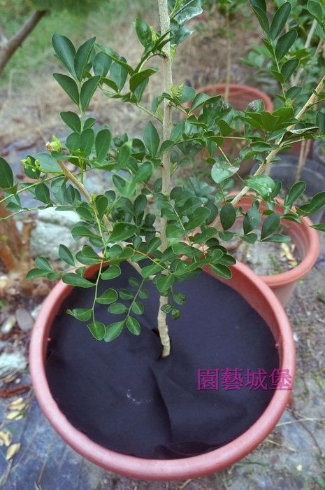 【園藝城堡】 42cm 黑色圓型防草布 盆栽用雜草抑制蓆 雜草蓆 抑草蓋(不織布)