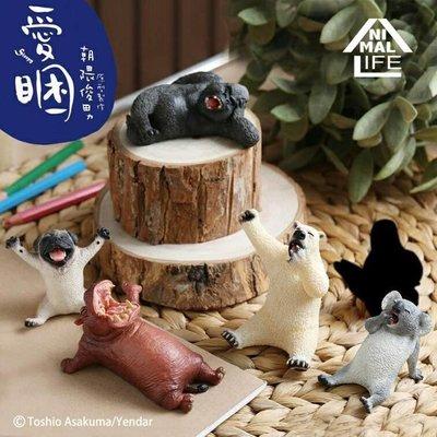 研達國際 盒玩  第二彈 朝隈俊男 愛睏動物 北極熊 無尾熊 巴哥 河馬 完整一中盒8入