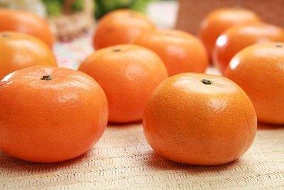 無籽砂糖橘大苗【隨時會生】嫁接款【滿5棵免運】無籽砂糖桔