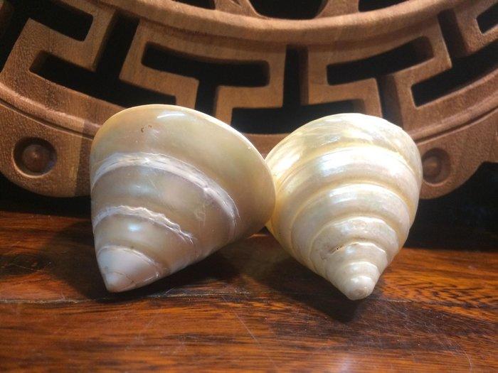 【小川堂】佛的法音 佛法像輪子一樣旋轉不停 天然 藏傳 尼泊爾 法器 海螺 吉祥八寶 八吉祥 6*6cm