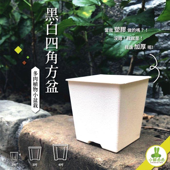 【小鮮肉肉】植栽小方盆 4吋 黑白兩色 塑膠加厚 多肉 栽培盆 花盆 四角盆