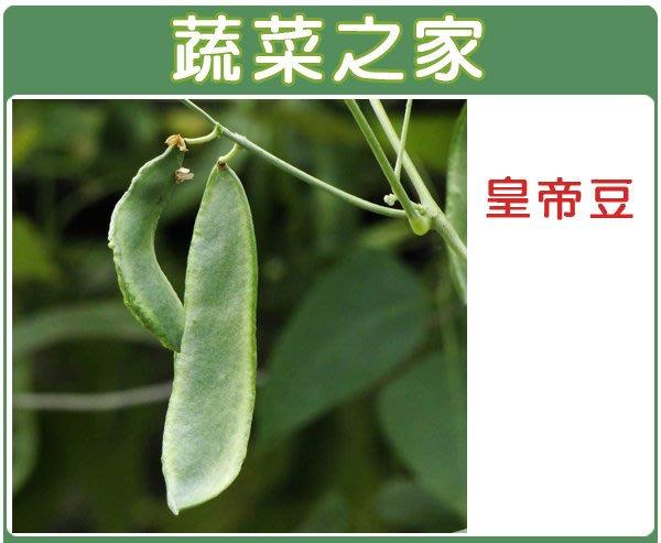 【蔬菜之家】E13.皇帝豆(萊豆)種子8顆(萊豆.早產.種皮白色.產量高.蔬菜種子)