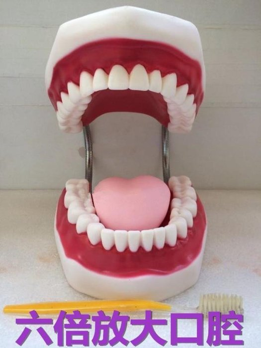 【奇滿來】六倍放大(有舌頭) 牙齒模型 口腔清潔保健護理牙齒模型 幼稚園學齡前寶寶兒童刷牙教學練習 醫學教具 ARFS