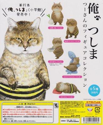 Tsushima貓 扭蛋
