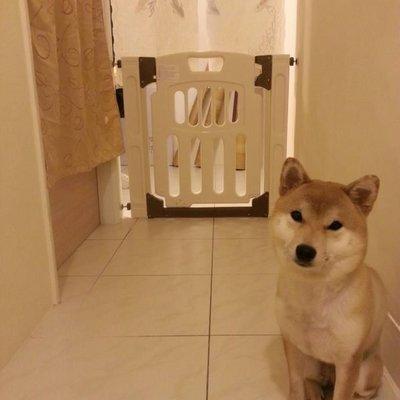 *台灣製造*原價1500元,現特價1300元/專利_可雙向開門/自動歸位_寵物安全門欄/狗柵欄