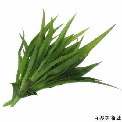 三件起出貨唷 仿真花草假花插花室內盆栽裝飾綠植假植物單支塑料蘭花全店免運中