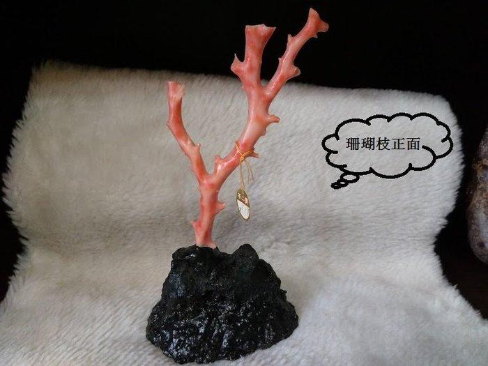 ~~『臻愛.珊瑚玉石小鋪』~~天然粉紅珊瑚(枝)~擺飾~~ 粉豆珊瑚    001