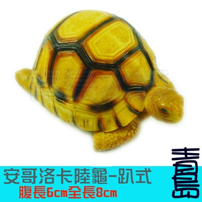 五1中0→Y。。。青島水族。。。B001手工原創 仿真陸龜模型 3D擬真模型 陸龜公仔==安哥洛卡/趴式