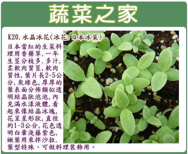 【蔬菜之家】K20.水晶冰花(冰花.日本冰菜)種子100顆(生菜料理柔軟肉質莖,可做料理裝飾用.香草種子)