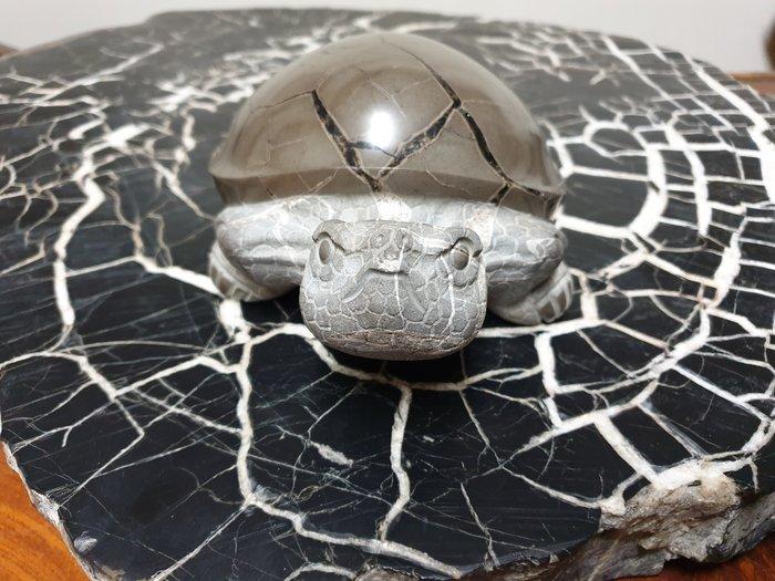 上和茶軒*台灣本土石雕龜作家 : 天淪人 老師*黃龜甲~極品美龜!