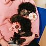 【蘑菇小隊】狗狗玩具耐咬磨牙寵物毛絨玩具...