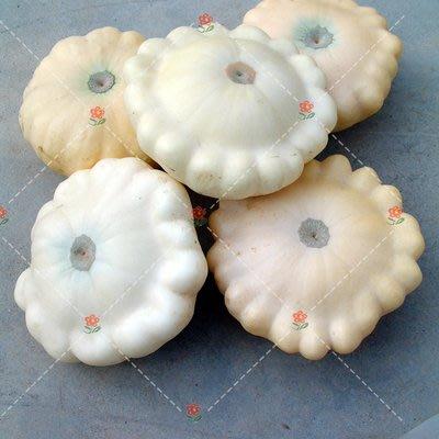 【小鮮肉肉】玩具南瓜種子-亞軍(飛碟型白色)(5粒裝) 可食用 庭院陽台易種