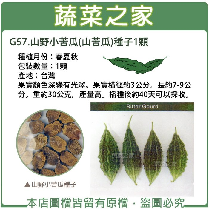 【蔬菜之家】G57.山野小苦瓜(山苦瓜)種子1顆(果實顏色深綠有光澤。果實橫徑約3公分,長約7-9公分。重約30公克)