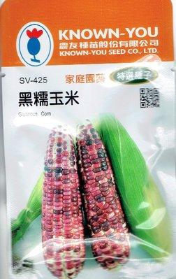 黑糯玉米 Glutinous Corn (sv-425) 玉米 【蔬果種子】農友種苗特選種子 每包約20公克