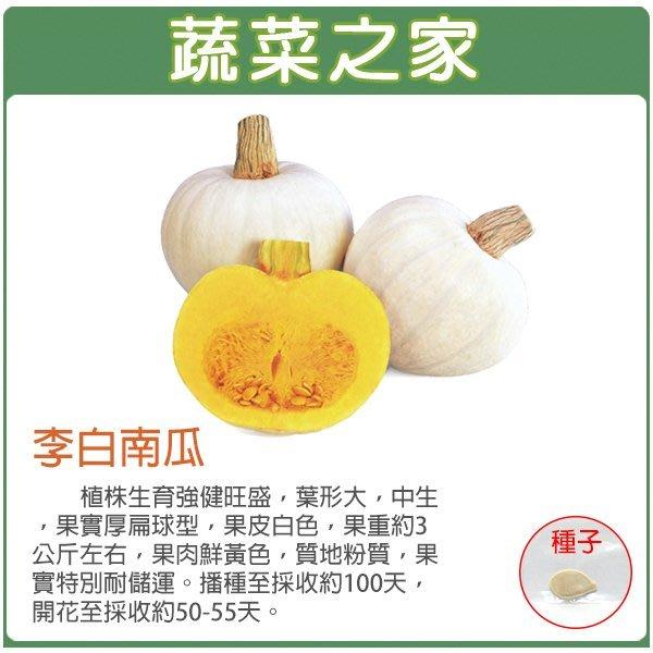 【蔬菜之家】G84.李白南瓜種子1顆(李白)(植株生育強健旺盛.果實厚扁球型.果皮白色.果重約3公斤左右.蔬菜種子)