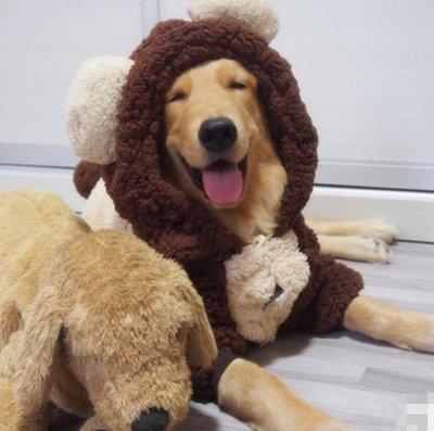 【興達生活】大狗衣服金毛哈士奇中型大型犬冬天加厚狗狗邊牧薩摩耶寵物秋冬裝`3613