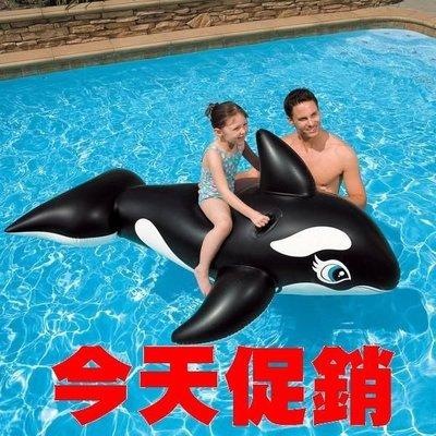 [休閒時尚] INTEX大黑鯨 193CM X 119CM   (保固1年)  58561
