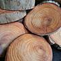超重油 檜木 檸檬香 黃檜 杯墊 聞香 原木 除臭 除蚊蟲 切片 聞香 藝術 擺飾 茶道 辦公室 木質 香氛 香味