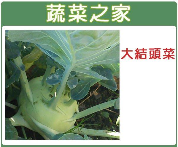 【蔬菜之家】C08.荷蘭大結頭種子10顆(約一般傳統結頭菜2~3倍大.球莖大.纖維少.不易老化.蔬菜種子)