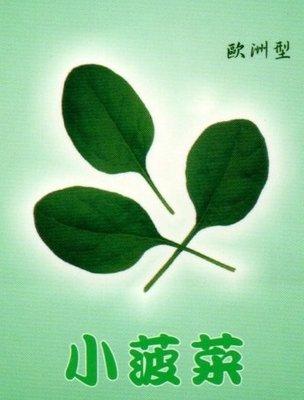 ~大包裝蔬菜種子~迷你菠菜,能 採收且全年 播種的菠菜品種,最 家庭種植~