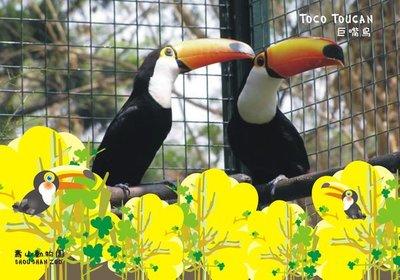 壽山動物園【插畫明信片】 巨嘴鳥