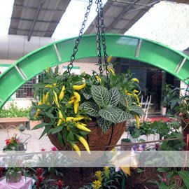 【鐵藝椰棕吊盆-小】吊籃 環保花盆 口徑20cm深12cm總高45cm-5101002