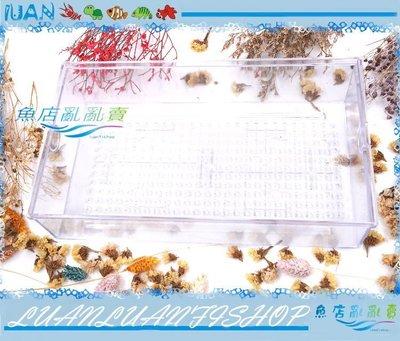 【~魚店亂亂賣~】生化式上部滴流式過濾槽擴充盒/滴流盒(便當盒)長30×17×7cm(大)單入