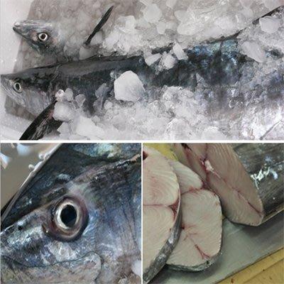 【澎湖優質土魠魚(鰆魚)-整尾-約14斤/組】新鮮魚貨乾淨處理產地直送(秤重計價)-2501003