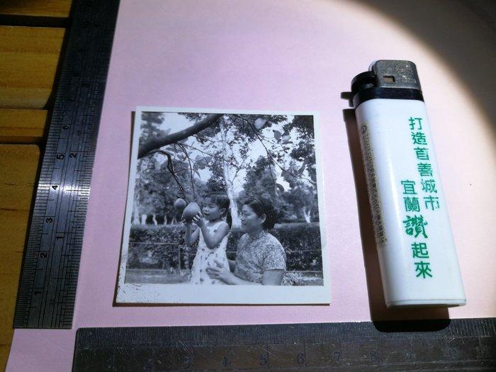 銘馨易拍重生網 PSS223 早期 50~60年代 媽媽與女兒 母抱女 柚子樹背景寫實老照如圖(1張ㄧ標,珍藏回憶)讓藏