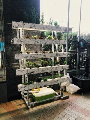 水耕植物栽培設備 水耕種植