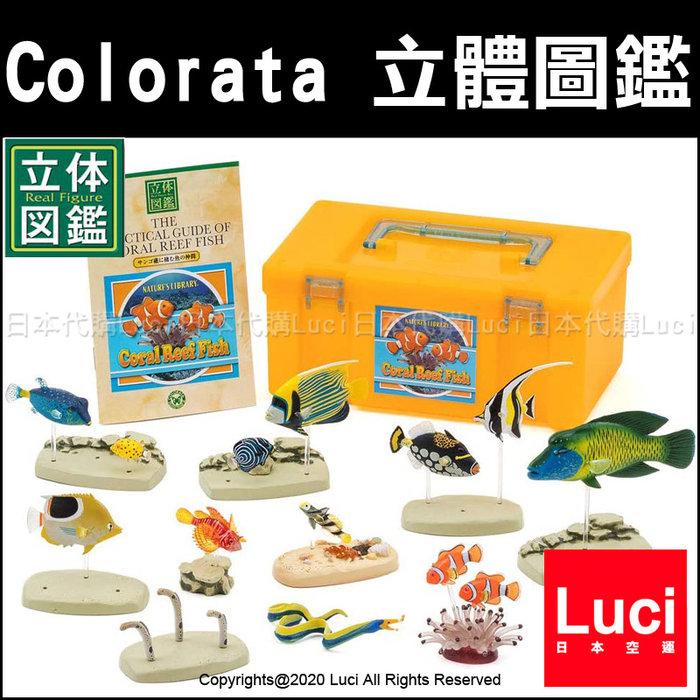 熱帶魚 Colorata 立體圖鑑 展示 教學模型 魚類生態 生物科學 珊瑚礁 模型 LUCI日本代購