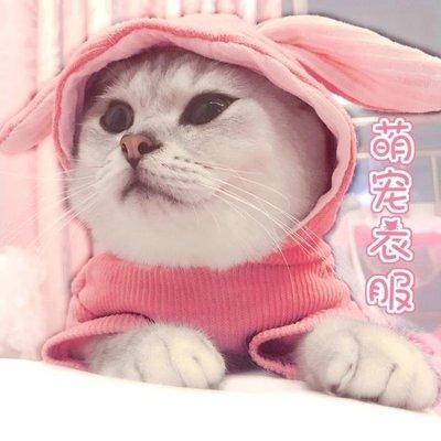 【T.P部落】 貓咪衣服可愛風萌兔耳朵帶帽秋冬裝小貓貓保暖英短狗狗幼貓寵物用品Y09Z8