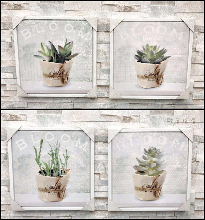 北歐風 白色框自然風多肉植物盆栽壁飾 牆壁掛畫 共4款花色 40*40公分牆上壁貼掛畫小品裝飾畫【歐舍傢居】