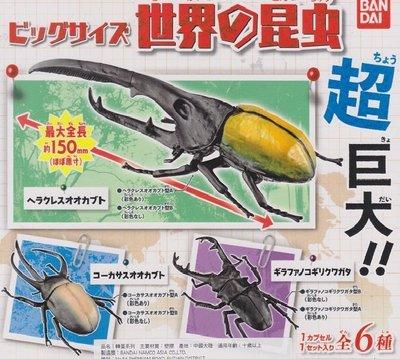 【奇蹟@蛋】 BANDAI (轉蛋)大尺寸昆蟲世界 大兜蟲  鍬形蟲  全6種整套販售  NO:5722