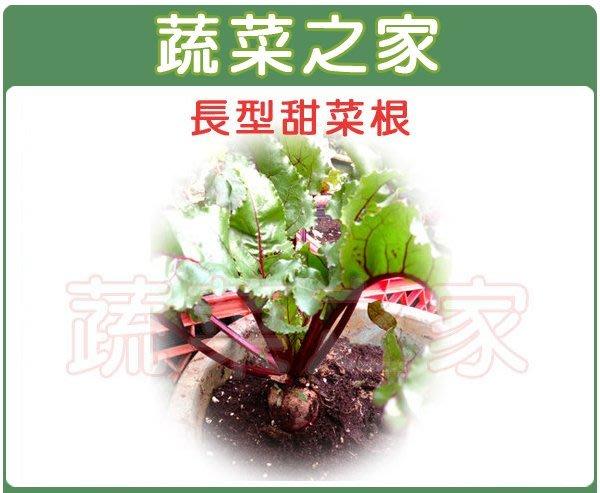 【蔬菜之家】C13.長型甜菜根種子60顆(進口種子.根菾菜,長條形根,肉質紅色.蔬菜種子)